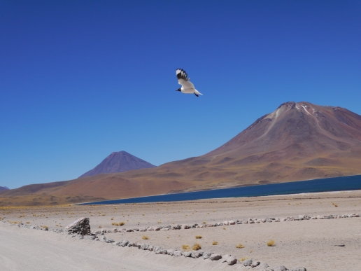 24-altiplano-lake