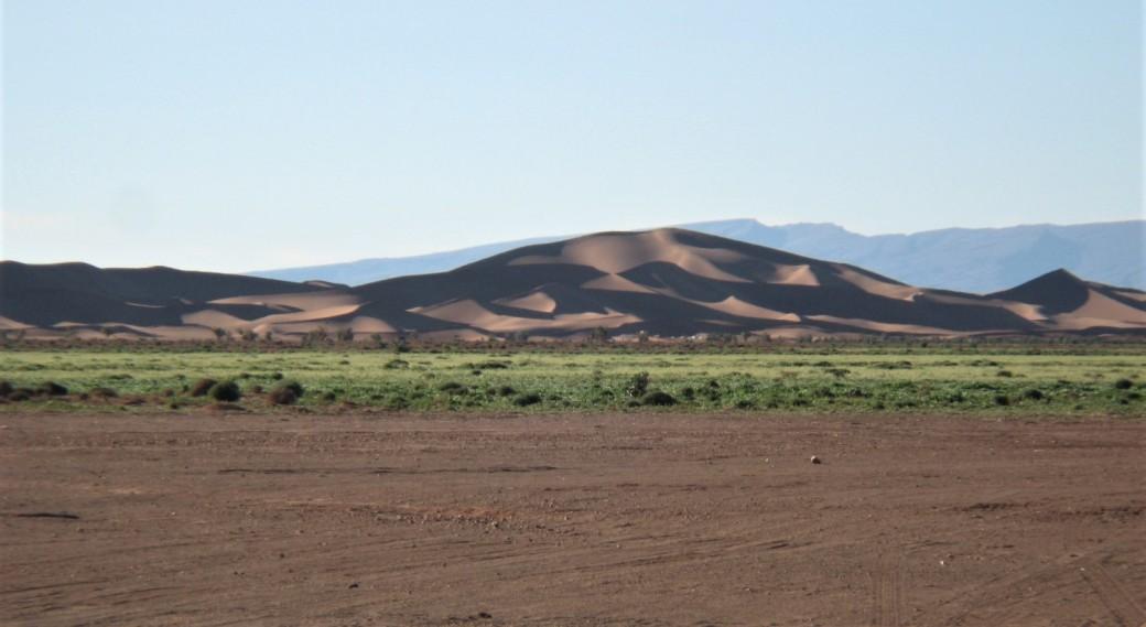 55 Desert with vegetation